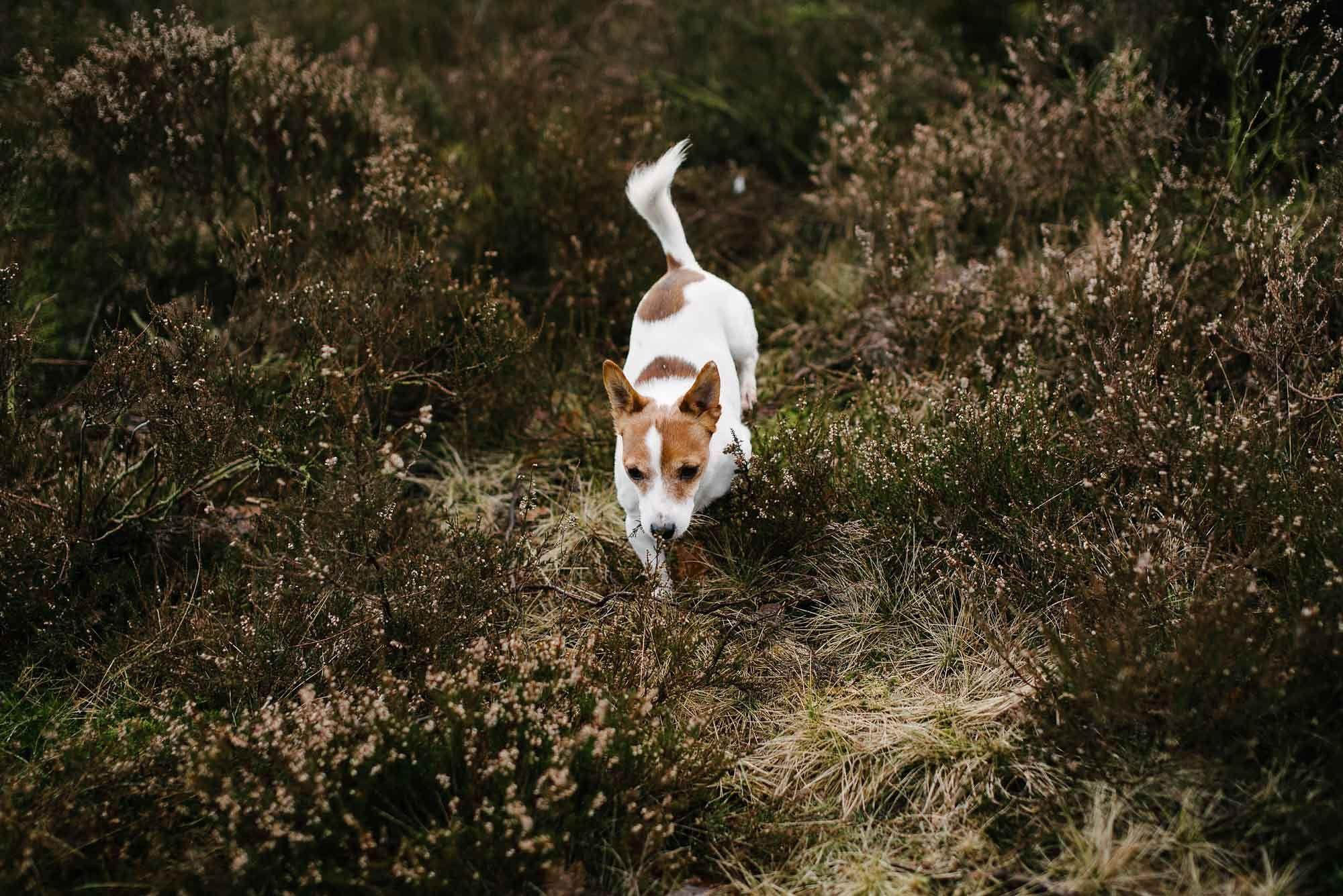 fotoshoot met hond